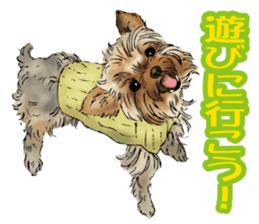 Yorkshire Terrier and Shih Tzu sticker #11313404