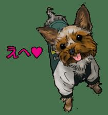 Yorkshire Terrier and Shih Tzu sticker #11313405