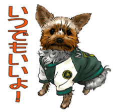 Yorkshire Terrier and Shih Tzu sticker #11313406