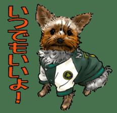 Yorkshire Terrier and Shih Tzu sticker #11313406