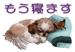Yorkshire Terrier and Shih Tzu sticker #11313407