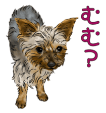 Yorkshire Terrier and Shih Tzu sticker #11313408