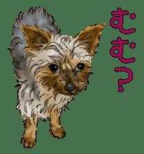 Yorkshire Terrier and Shih Tzu sticker #11313408