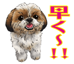 Yorkshire Terrier and Shih Tzu sticker #11313410