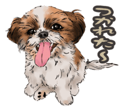Yorkshire Terrier and Shih Tzu sticker #11313411