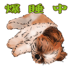 Yorkshire Terrier and Shih Tzu sticker #11313412