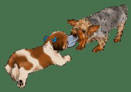 Yorkshire Terrier and Shih Tzu sticker #11313413