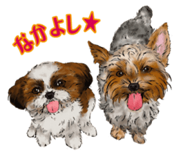 Yorkshire Terrier and Shih Tzu sticker #11313414