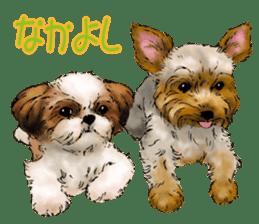 Yorkshire Terrier and Shih Tzu sticker #11313415