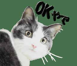 kansai dialect cat3 sticker #11411216