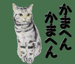 kansai dialect cat3 sticker #11411218