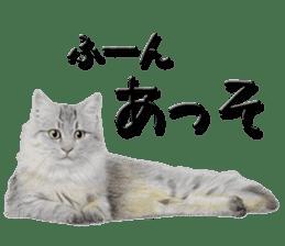 kansai dialect cat3 sticker #11411220