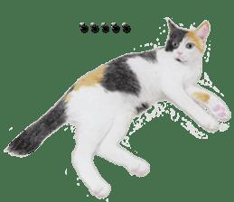 kansai dialect cat3 sticker #11411223
