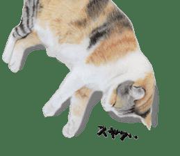 kansai dialect cat3 sticker #11411226