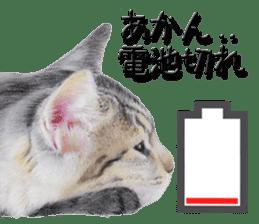 kansai dialect cat3 sticker #11411229
