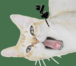 kansai dialect cat3 sticker #11411231