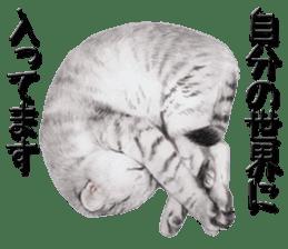 kansai dialect cat3 sticker #11411232