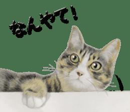 kansai dialect cat3 sticker #11411237