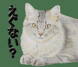 kansai dialect cat3 sticker #11411238