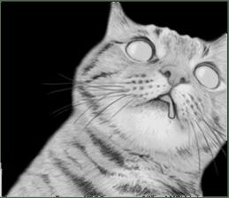 kansai dialect cat3 sticker #11411241
