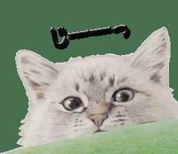 kansai dialect cat3 sticker #11411247