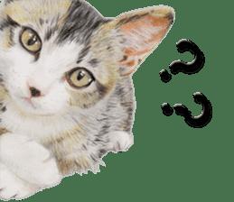 kansai dialect cat3 sticker #11411250