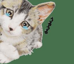 kansai dialect cat3 sticker #11411251