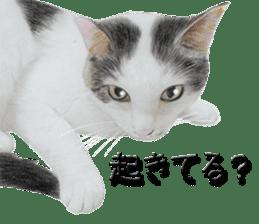 kansai dialect cat3 sticker #11411252