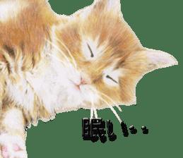 kansai dialect cat3 sticker #11411253