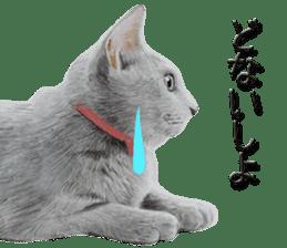 kansai dialect cat3 sticker #11411254