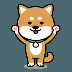 Messenger dog ! Mameshiba