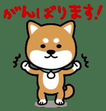 Messenger dog ! Mameshiba sticker #11441017