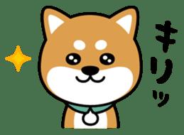 Messenger dog ! Mameshiba sticker #11441025