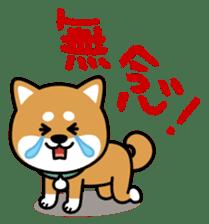 Messenger dog ! Mameshiba sticker #11441031