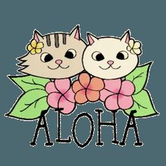 Hawaiian cats LOCO&MOCO