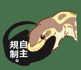 Ball python sticker #11497733