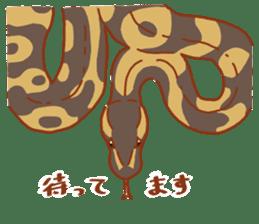 Ball python sticker #11497738