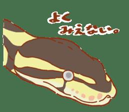 Ball python sticker #11497742