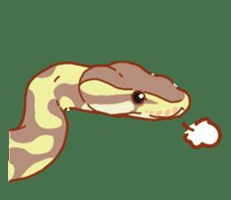 Ball python sticker #11497747