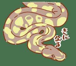 Ball python sticker #11497750