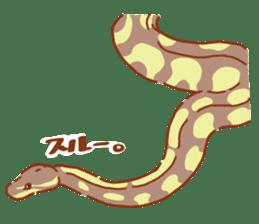 Ball python sticker #11497757