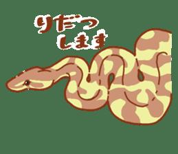 Ball python sticker #11497761
