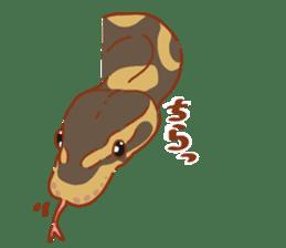 Ball python sticker #11497763