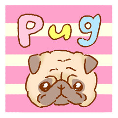 Sticker of a cute pug