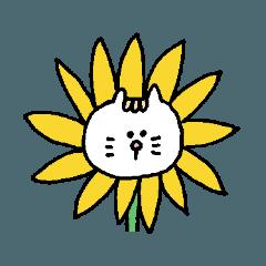 Kawaii White Kitty Summer