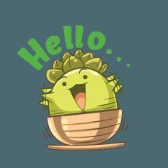Haworthia Kingdom : Obtusa Monster