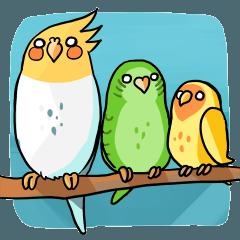 Bird Circle - Life