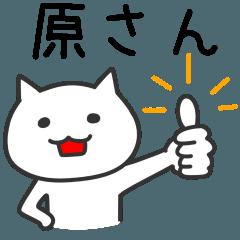 Cat for HARA