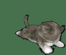 Animation Mofu Kitten Mofuu sticker #11754290