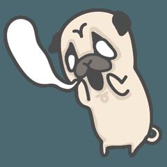 A Little Pug 2 !!!